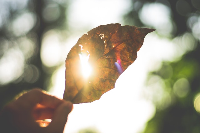 Leaf and sunshine image